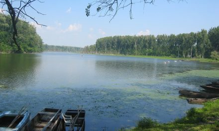 Magyarország vizeinek kevesebb mint 20 százaléka van jó ökológiai állapotban
