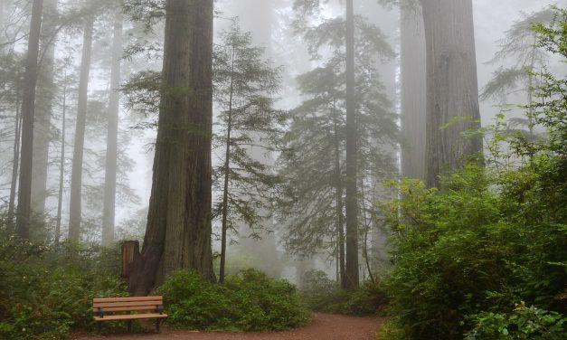 Az amerikai nemzeti parkokban ugyanolyan szennyezett a levegő, mint a nagyvárosokban