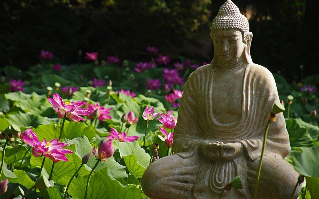 Virágzó lótuszok, jóga és hangfürdő vár a szegedi Füvészkertben