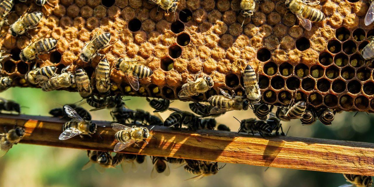 Méhek segítségével tanulmányozzák Róma légszennyezettségét