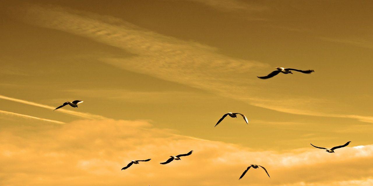 A klímaváltozás miatt omolhatott össze a Mojave-sivatagban élő madárfajok populációja