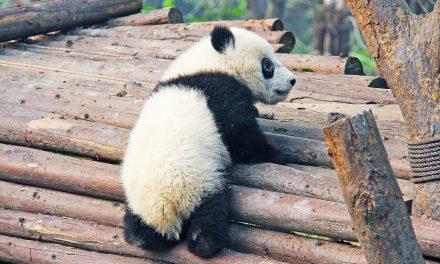A pekingi állatkert megbünteti az állatokat etetőket