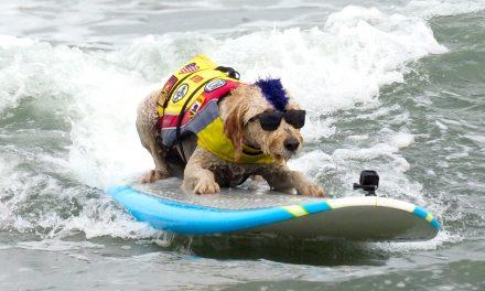 Így lovagolnak a hullámokon a Kutya Szörf Világbajnokság győztesei