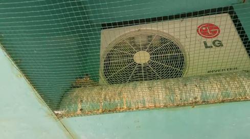 Ráccsal zárták el a fecskefiókákat a szülőktől Tiszaújvárosban