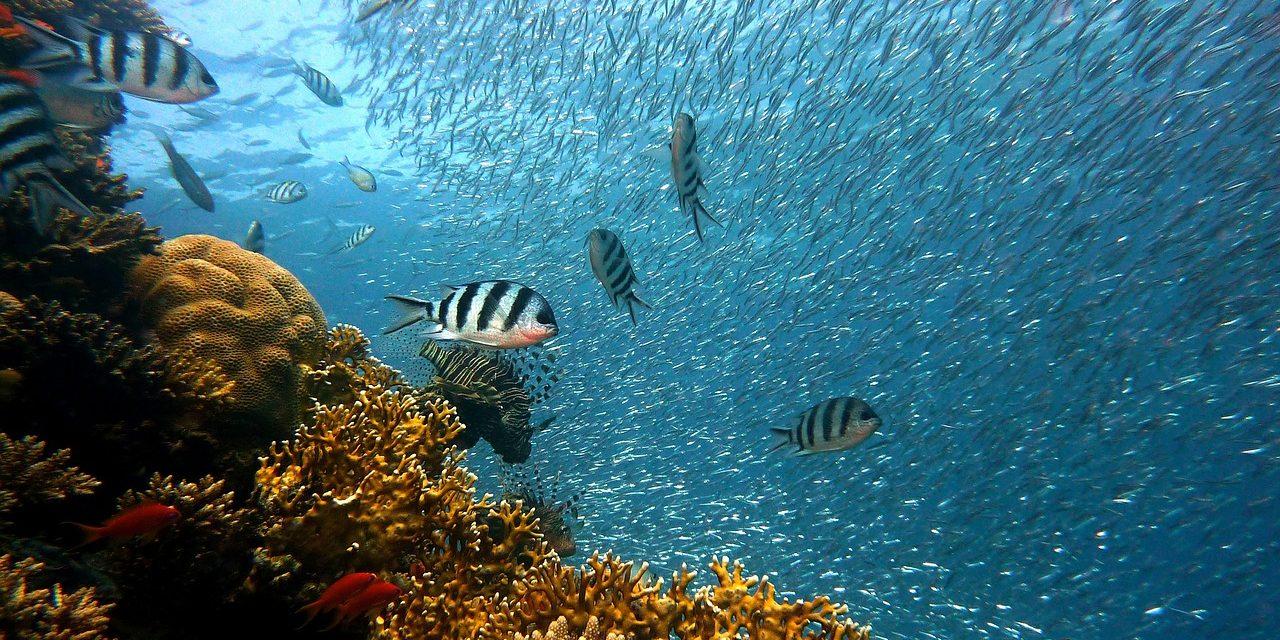 Virtuálisan már bárki búvárkodhat a Nagy-korallzátonyon