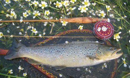 A hőség miatt tömegével pusztulnak a halak a Rajna svájci szakaszán
