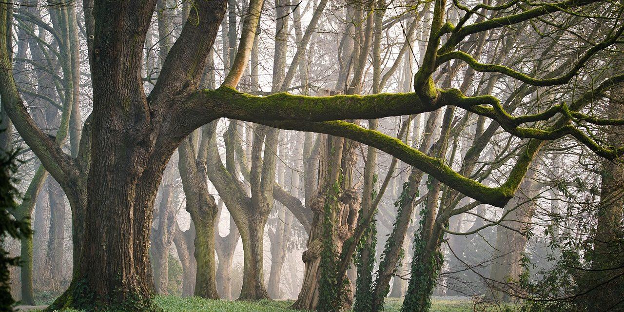 A fák beszélgetnek, számolnak, gondoskodnak az utódaikról és tanulnak is