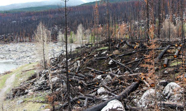 Erdőtüzek miatt romlott a levegő minősége Kanadában