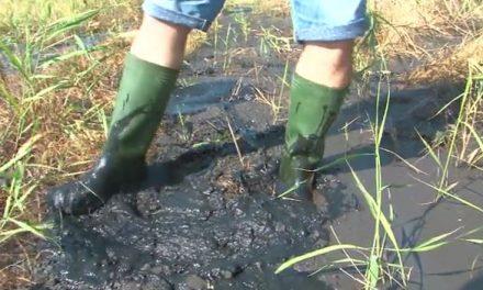 Valami büdös és olajos ömlik Hatvanban (videóval)