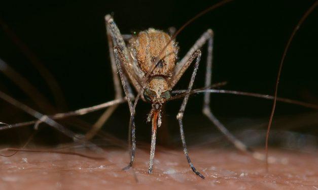 Nyugat-nílusi láz: fontos a megelőzés, a szúnyogok elleni védekezés