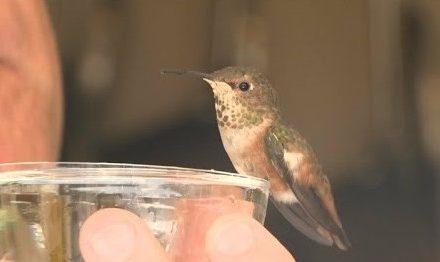 Az ember, aki megmentette a kutyát, aki megmentette a kolibrit