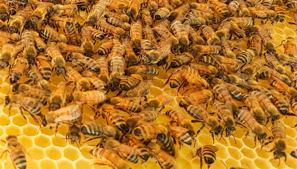 Elpusztult a magyar méhek fele