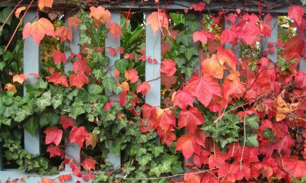 6 legjobb növény szomszéd ellen