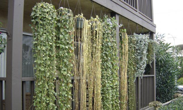 Nem akarod, hogy belásson a szomszéd? Ültess növényfüggönyt!