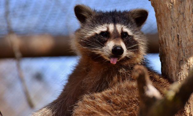 Augusztus utolsó napján rendezik az Állatkertek éjszakáját