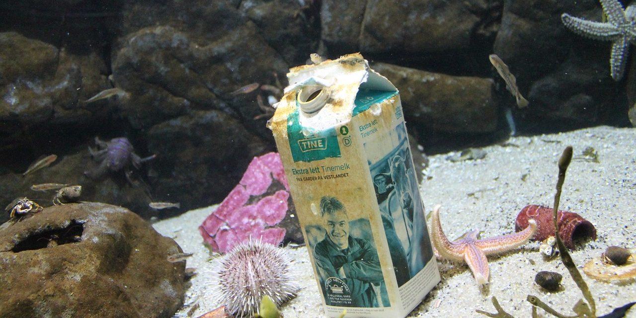 Hulladékkal szennyezett akvárium látható a Pécsi Állatkertben