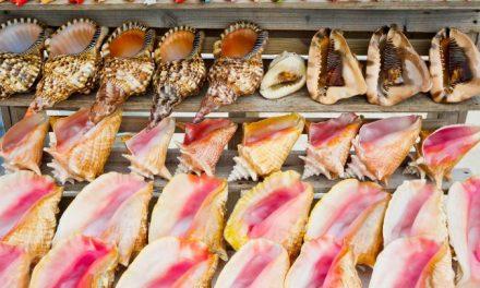 Az állatkínzáshoz járulsz hozzá, ha kagylóhéjat veszel szuvenírként