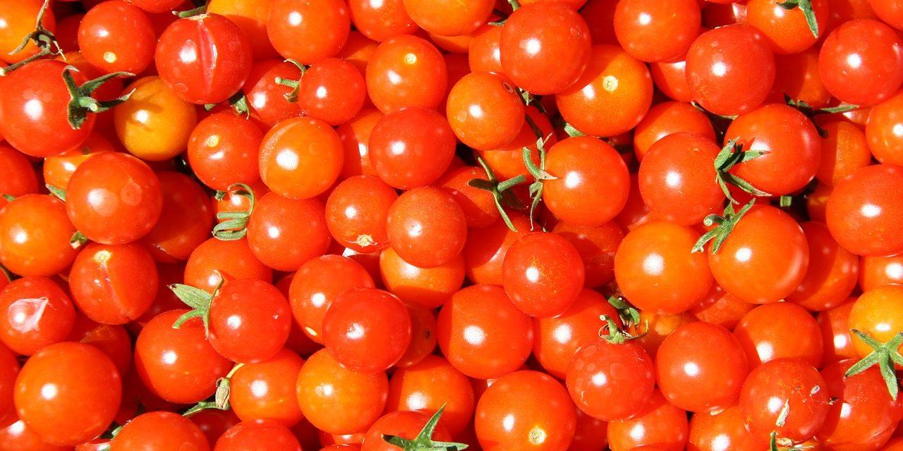 Csongrád megyében terem a legjobb koktélparadicsom