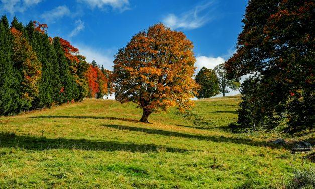 Gyorsabban nőnek a fák, de kalóriaértékük kisebb a globális felmelegedés miatt