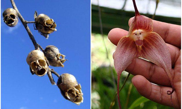 Jézus a pirítóson, majomarcú orchidea és pucér nő a fán