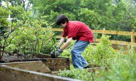 Saját zöldségeiket termesztik meg ezek a holland iskolások