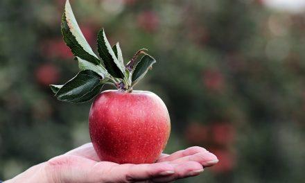 Túl sok gyümölcsöd termett? Kínáld fel annak, akinek nincs!