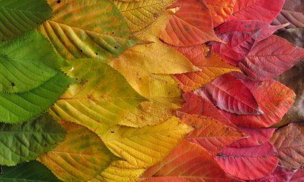 Miért színesek ősszel a levelek?