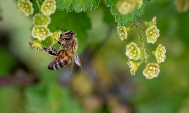 A darazsakat utáljuk, a méheket szeretjük
