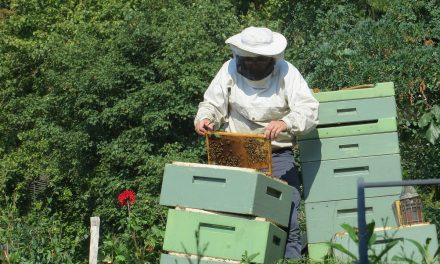Azonnali méhzárlatot rendeltek el Pécsett