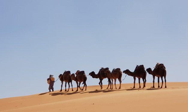 Megszüntetnék a sivatagi szárazságot a napelem- és szélfarmok