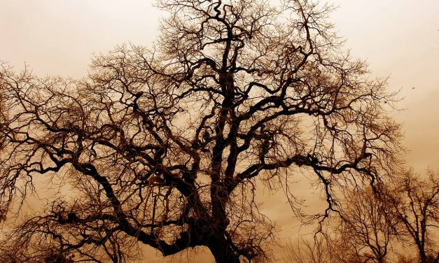 Öreg tölgyfákon élő új bogárfajt fedeztek fel Csehországban