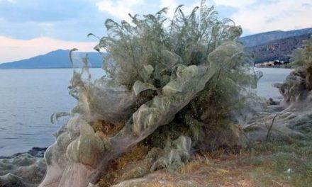 Óriási területen szőttek be a pókok egy görög partot