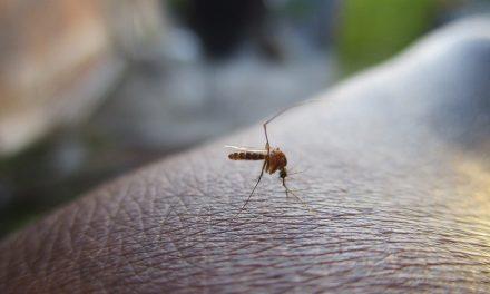 A szúnyogok is terjesztik a mikroműanyagot
