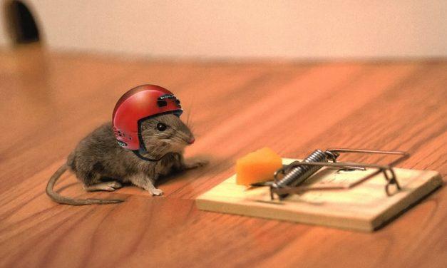 Sírást hallott a hűtő mögül, zokogva mentette meg az egeret