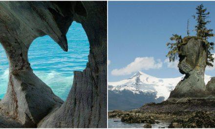 Dínóként ágaskodó fenyőfa és emberi arc a sziklában