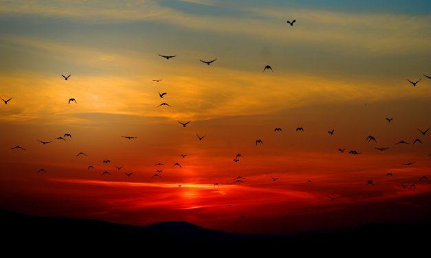 Közel 8 milliárd madár vándorol az Egyesült Államok légterében
