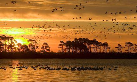 Nyolc madárfaj halt ki az elmúlt években