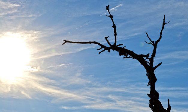Magasabb halálozási arányt okoz a klímaváltozás Magyarországon