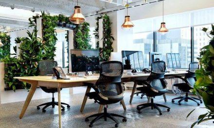 HR-esek figyelmébe: az irodakertészet az új cafeteria