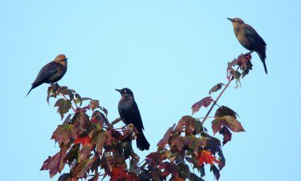 Így költöznek majd madarak a kertedbe