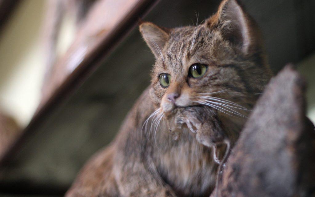 Ősszel megbocsájtjuk a macskáknak, hogy állandóan telesz.rják a kertet
