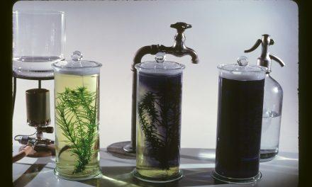 Növényi víztisztítással működő nyilvános vécét mutatnak be Bécsben