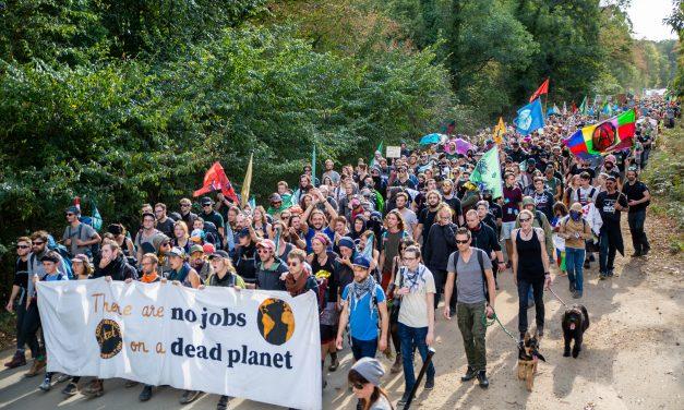 Egy startup cég mentheti meg a kivágásra ítélt 12 ezer éves német erdőt