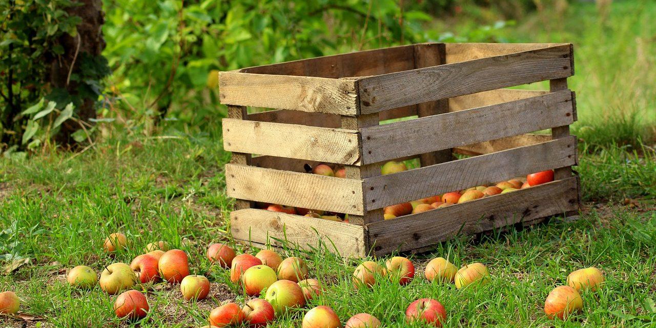 Nincs elegendő zöldség és gyümölcs a világon