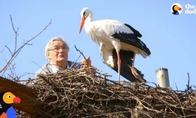A legszebb ember-madár barátság és madárhűség egy történetben