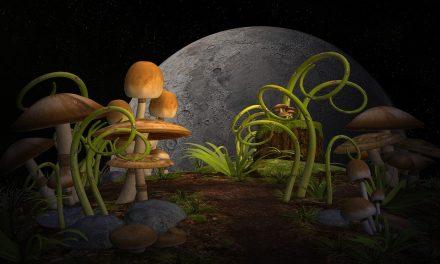 Holdnaptár – okosság vagy okoskodás?