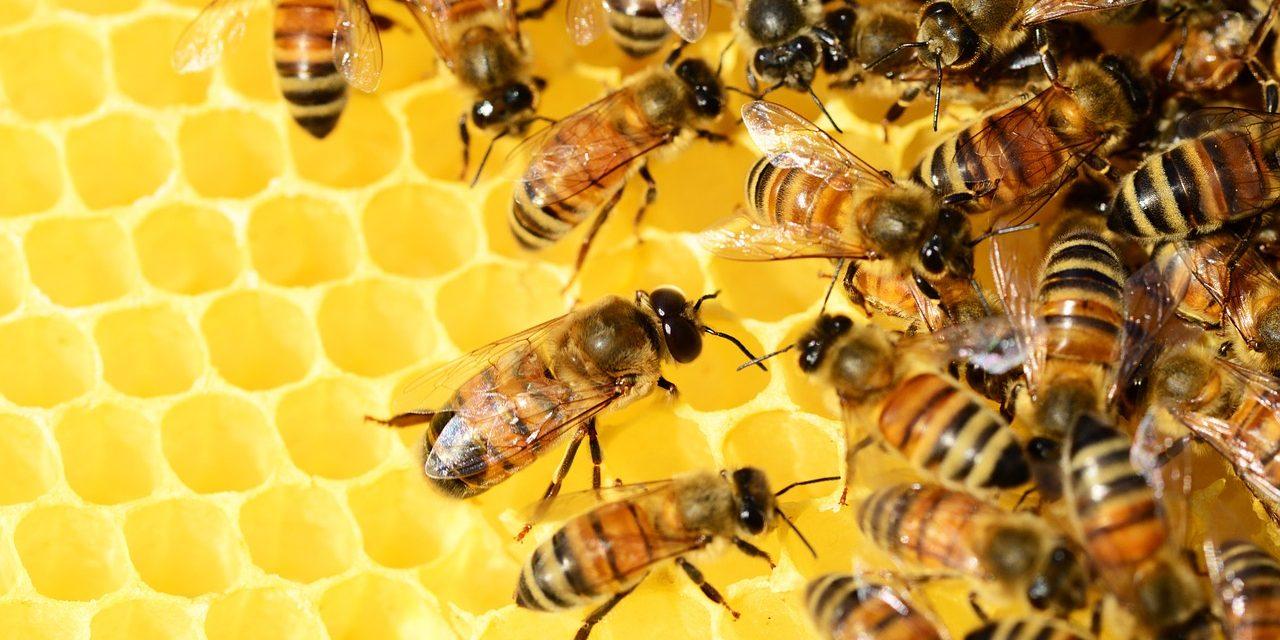 Felhő technológiával dolgoznak a vészesen fogyatkozó méhpopulációk megmentésén