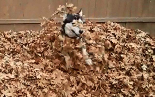 Hát ki tud ennyire örülni az őszi faleveleknek?