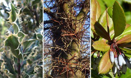 A 9 legjobb növény betörő ellen