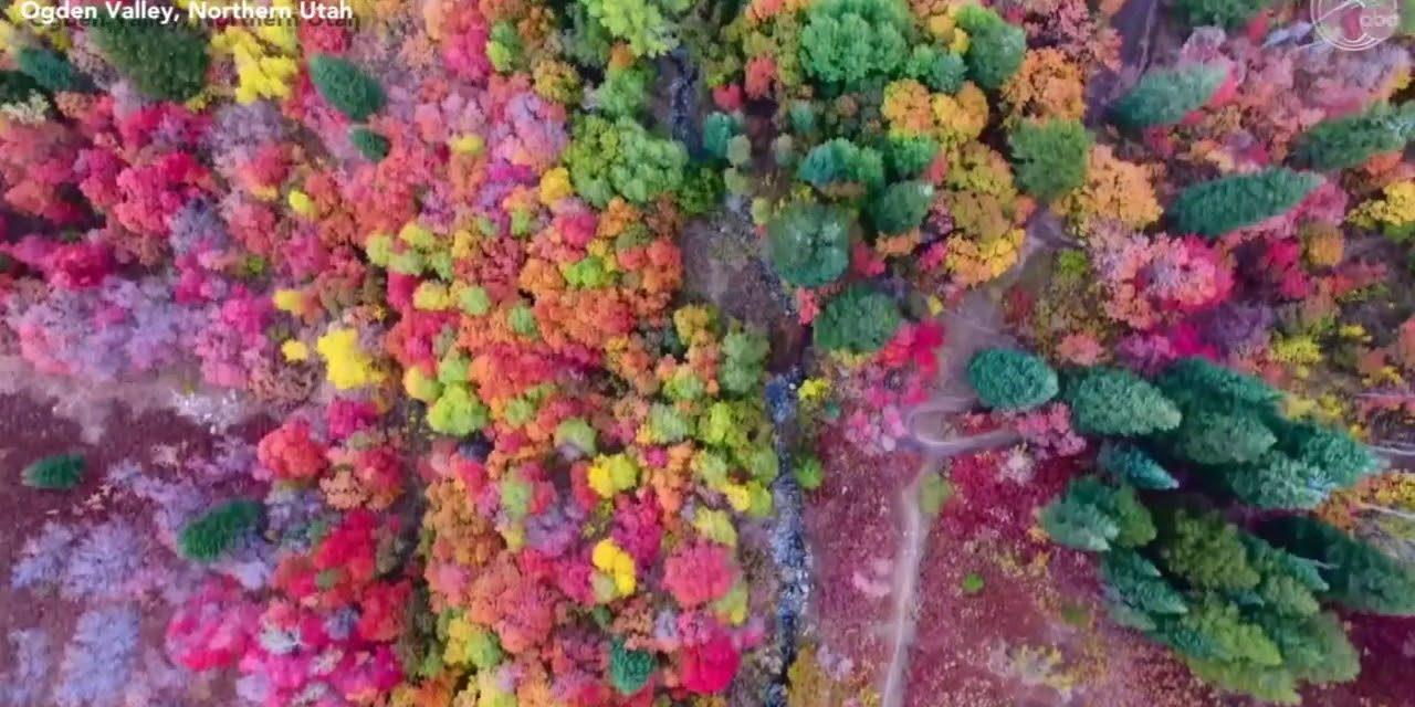 Ilyen szokatlanul színesedő őszi erdőt még sosem láttunk